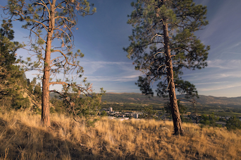 view from mountain biking trail in the Okanagan