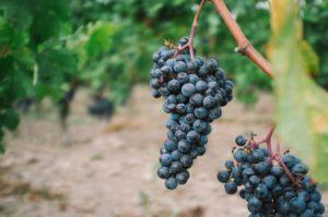kelowna winery experience